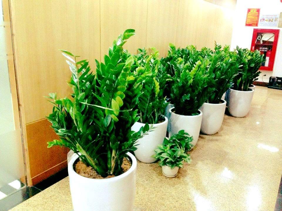 Bã chè có tác dụng giữ ẩm và cung cấp dinh dưỡng cho cây giống như một loại phân bón thân thiện với môi trường