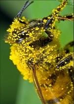 Phấn hoa 100gr