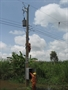 Công ty Điện lực Cà Mau - Quyết tâm giữ điện những ngày cuối năm