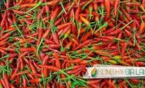 Vietnamese Chili