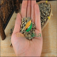 Robusta coffee Grade 1 Screen 16