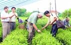 """Hội thảo """"nâng cao chất lượng, giá trị sản phẩm trà thái nguyên"""" Để ngành Chè phát triển bền vững"""