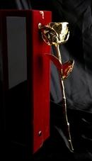 Hoa Hồng Mạ Vàng 24K (Nhập Khẩu Ấn Độ) - 6 Inch