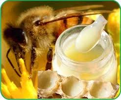 Hiện trạng sử dụng sữa ong chúa trên thế giới và Việt Nam