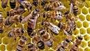 Nhiệm vụ của những chú ong