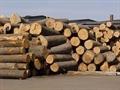 Quí I/2012, xuất - nhập khẩu gỗ và sản phẩm đều tăng trưởng về kim ngạch (Ngày:15/5/2012)