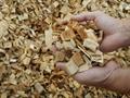 Doanh nghiệp Đài Loan muốn mua bột gỗ/giấy (Wood Pulp)
