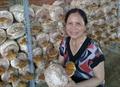 Hướng dẫn kỹ thuật trồng nấm linh chi