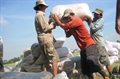 Giá gạo thế giới ngày 24/05/2013