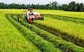 Đồng bằng sông Cửu long là vùng trọng điểm xây dựng thương hiệu gạo Việt