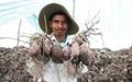 MDEC - Sóc Trăng 2014: Cơ hội quảng bá tiềm năng nông nghiệp
