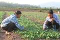 Công ty TNHH Đầu tư Vũ Đại Hùng:Tiên phong sản xuất rau theo hướng hữu cơ