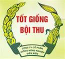 Lên Điện Biên thăm lễ hội Hoa Ban - Thưởng thức Chè Tuyết Shan Cổ Thụ