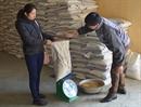 DIENBIENSEED Chủ động nguồn giống sản xuất vụ đông xuân