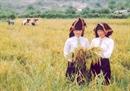 DIENBIENSEED Nguồn gốc, đặc điểm nhận dạng gạo của Điện Biên
