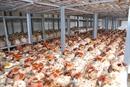 TRUNG TÂM NẤM ĐIỆN BIÊN Nhân rộng nghề trồng nấm ở Điện Biên