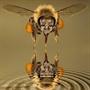Những điều thú vị về con ong
