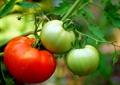 Nhận dạng thực phẩm sinh học
