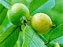 Những loại trái cây dồi dào Vitamin C