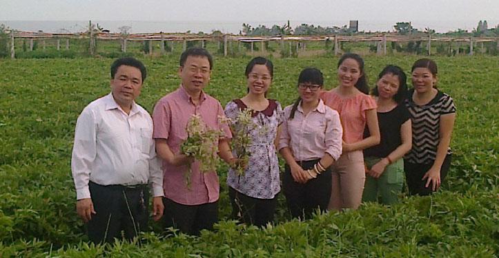 Đoàn công tác bộ y tế thăm quan vùng trồng đương quy Khải Hà